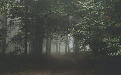 La neblina del SEO